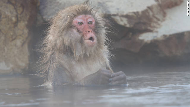 This Japanese snow monkey may or may not ever type Shakespeare. A digital version of typing monkeys is much further along.