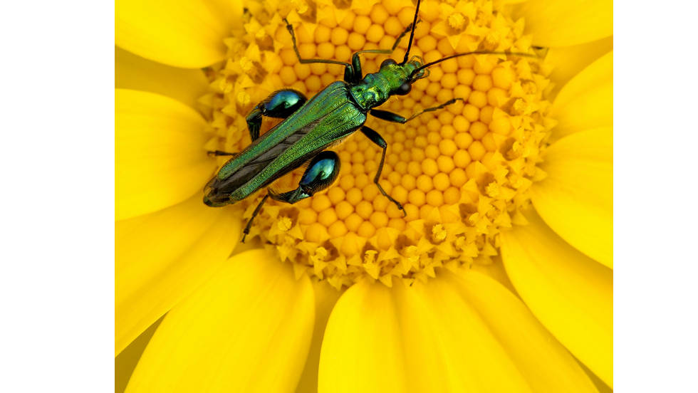 "BRITISH SEASONS: ""Summer Insects"" by Ross Hoddinott"