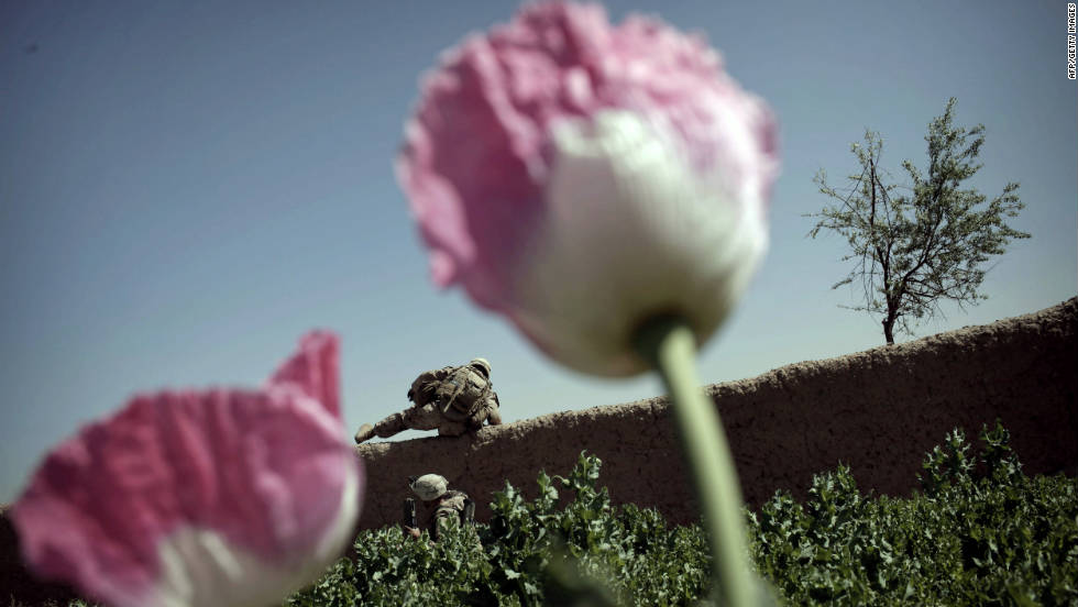 U.S. Marines jump over a wall in a poppy field under heavy fire in a Taliban stronghold area in northern Marjah on March 25, 2010. Afghan poppies, which start as flowers in farmers' fields and often wind up as heroin on U.S. streets, fuel a $3 billion a year industry in Afghanistan.
