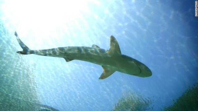 Se dejó criar tiburones toro en una lago en un campo de golf de Queensland, Australia