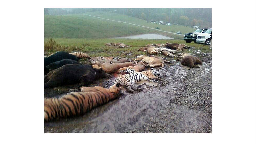 The bodies of animals that got free of an Ohio farm lie on the ground outside Zanesville. Officials were forced to shoot the animals, citing public safety.