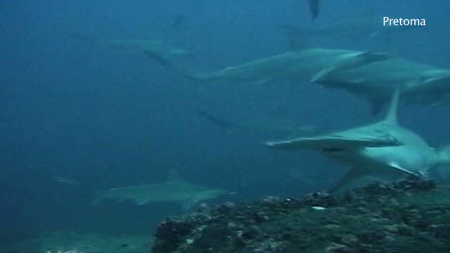 Fight to ban shark finning in Costa Rica