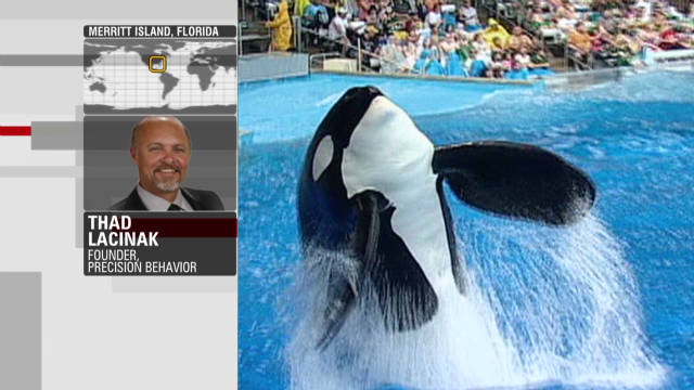 PETA: SeaWorld enslaves killer whales