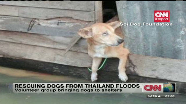 Rescuing dogs from Thailand floods