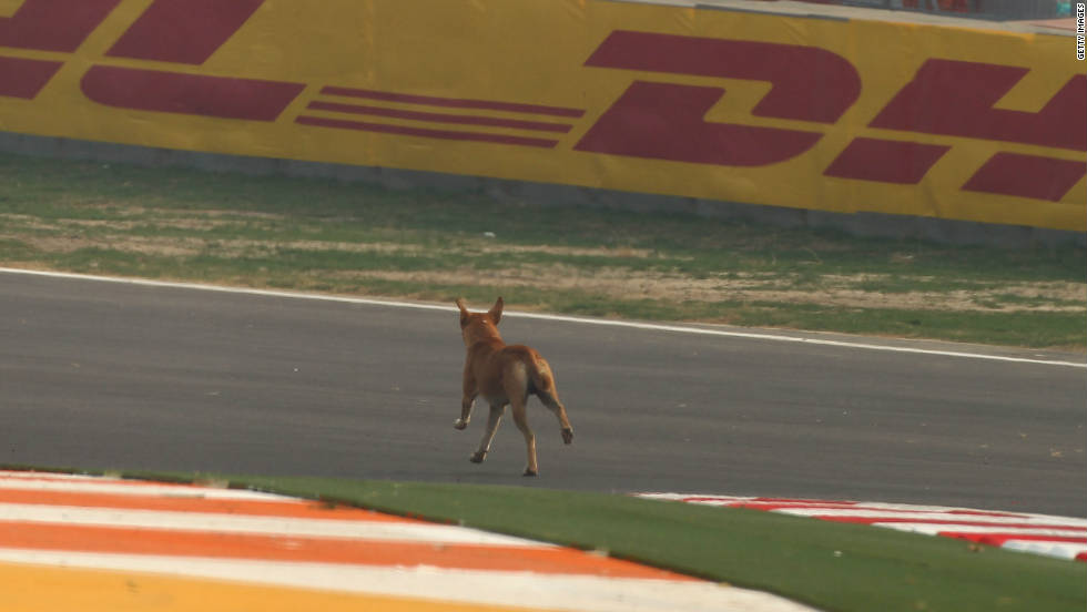 A dog runs across the track at the Buddh International Circuit before Friday's opening practice session for the inaugural Indian Grand Prix.
