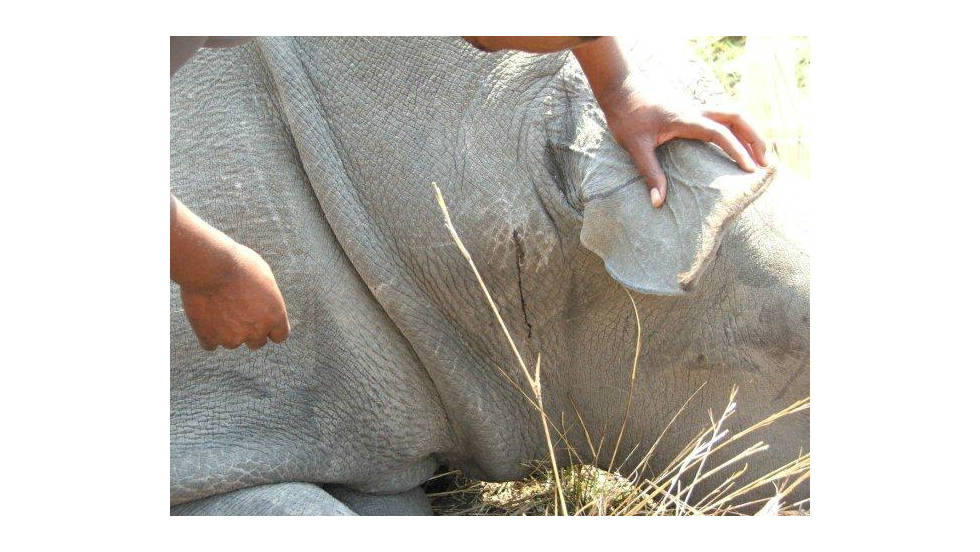 A dead rhino found in Mpumalanga state, in September this year.