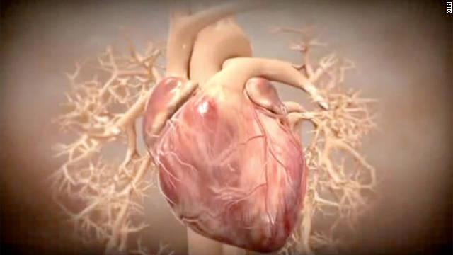 Studies  Stem Cells Reverse Heart Damage