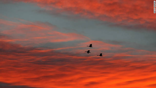 Canada geese head south in November over a farmer's field in New Berlin, Wisconsin.