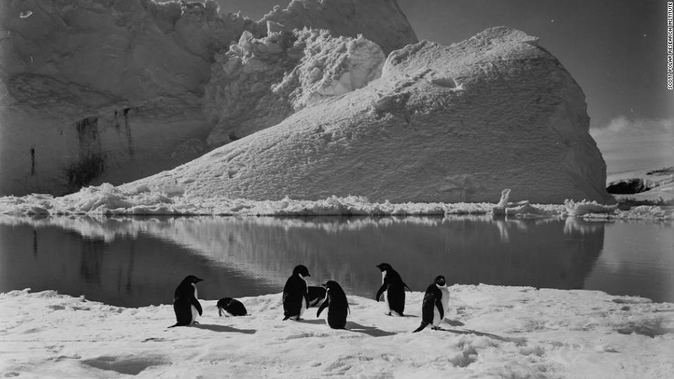The pictures were taken to illustrate lecture tours on the group's return, to help finance the expedition. Photo: Penguins frolicking by an iceberg.