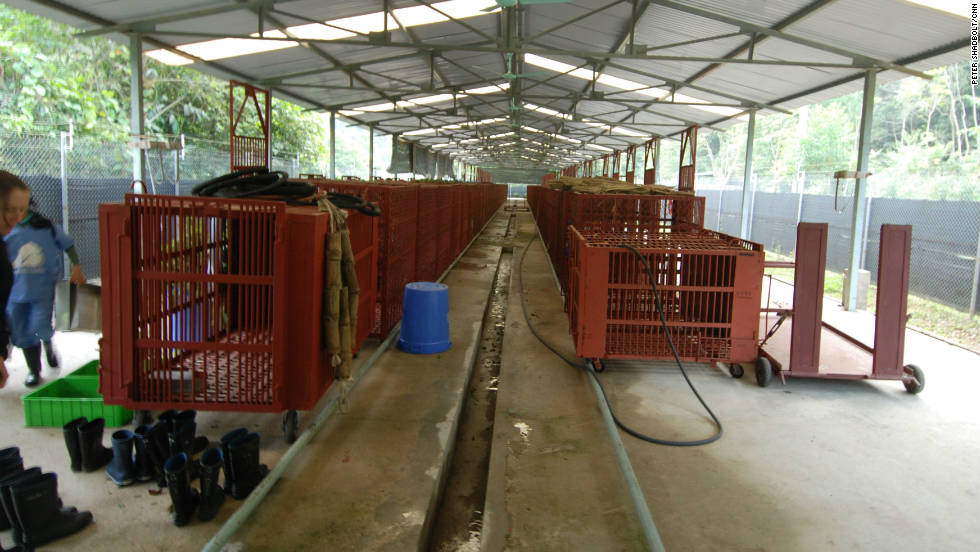 The quarantine center at the bear facility. The park has an agreement to take 200 rescued bears.