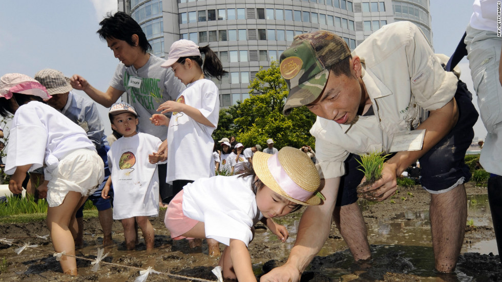 Participants plant rice on the Roppongi Hills' rooftop rice field, in Tokyo on May 17, 2008. Around 130 participated in the rice planting event, held on the top of the building, which was built for environmental education purposes, and also helps to keep down electricity usage as the garden on the roof helps to insulate the structure in summer.