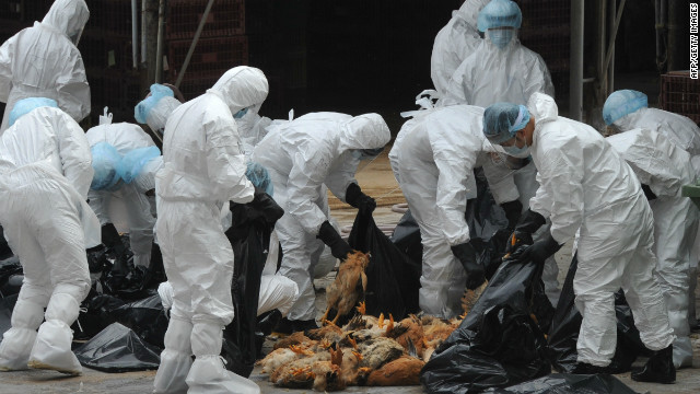 Authorities in Hong Kong culled 17,000 chickens earlier this month, after three birds tested positive for the H5N1 strain of bird flu.