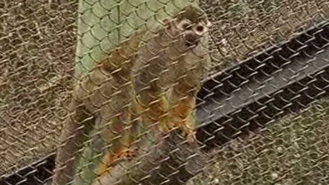 Stolen monkey returned to zoo