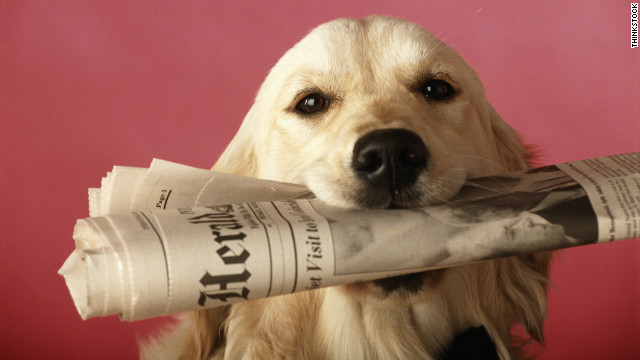 We can learn a lot from our pets, especially when they make headlines.