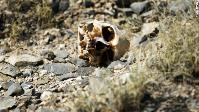 A skull recently discovered rests on the ground  March 19, 2010 in the county of Juarez, Mexico. The skull was discovered with other remains of what is thought to be many victims of recent drug violence. The border city of Juarez has been racked by violent drug-related crime, making it among the most dangerous cities in the world. As competing drug cartels fight over lucrative drug corridors along the U.S. border, the murder rate in Juarez has risen to 173 slayings for every 100,000 residents. President Felipe Calderon in 2009 disbanded the corrupt local police force and sent 10,000 soldiers to Juarez, but the violence has raged on.