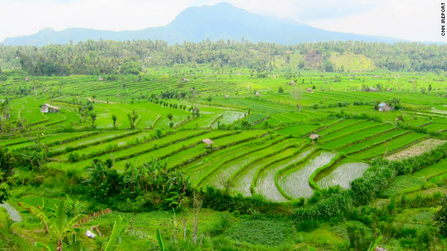 Some rice fields in Bali, Indonesia