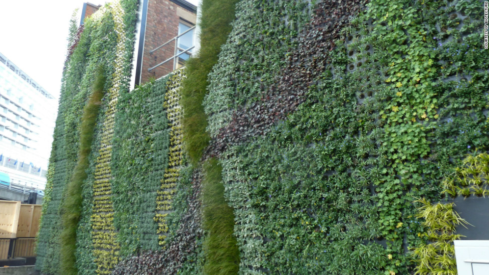 UK company Biotecture have created a green wall for the side of Edgware Road Underground station in London which sits near the busy, and very polluted, Marylebone Road. It is hoped that the new wall will help eradicate some of the air pollution in the area.