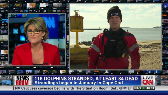 exp Dolphins Stranding Themselves in Record Numbers Along Cape Cod_00002001