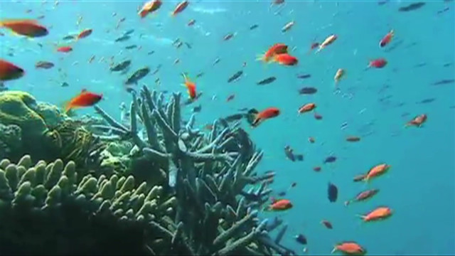 Great Barrier Reef's virtual dive