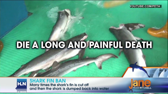 Banning sale of shark fins