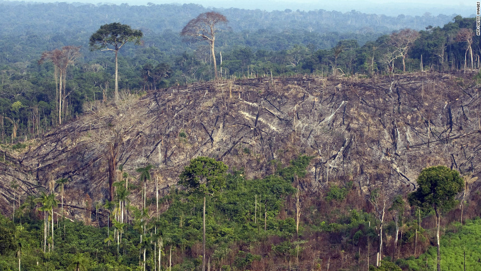 This sector of forest in the state of Para in northern Brazil was illegally felled in 2009.