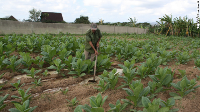 A Cuban farmer works the land in Pinar del Rio, Cuba, a region famous for producing the island's best tobacco.