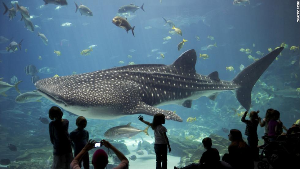 Tours Monterey Aquarium
