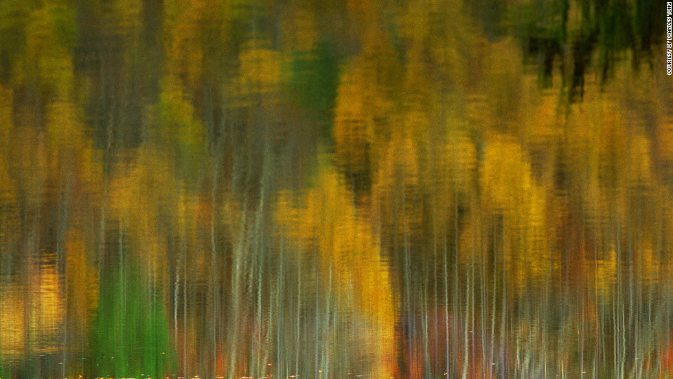 """In autumn (in Fukushima), the falling leaves colored the forest and the sweet scent of maple leaves merged with every breath that I drew in,"" photographer Frances Tong says."
