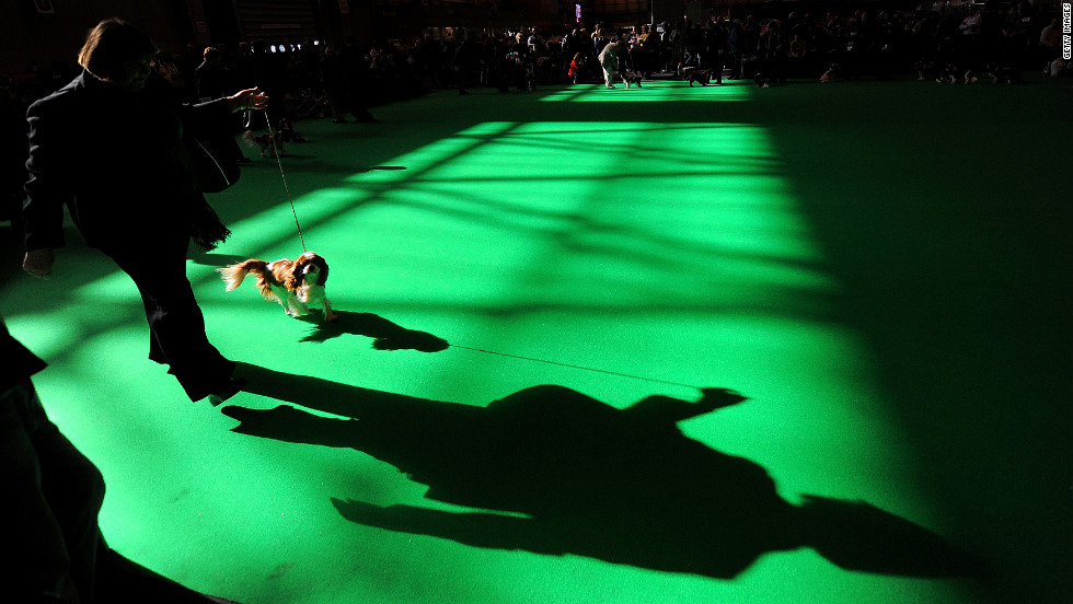 The Crufts dog show kicked off in Birmingham, England, on Thursday, March 8. The annual event is one of the world's biggest dog shows.
