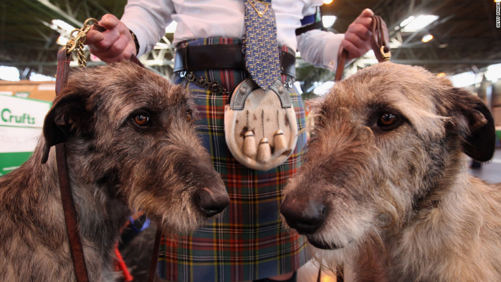 Phil Poole holds his two Irish Wolfhounds on the fourth and final day of Crufts.