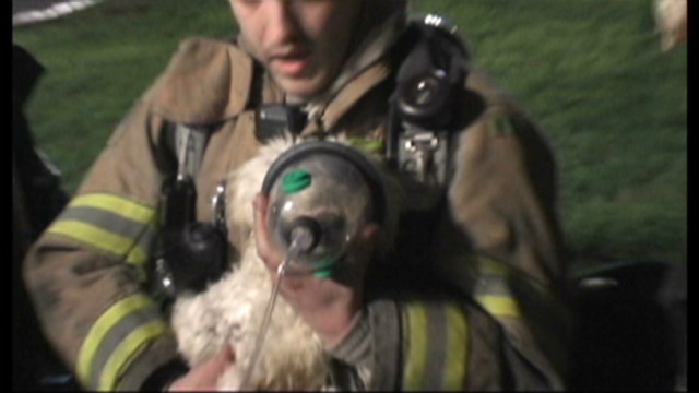 firefighters.puppy.rescue_00002428