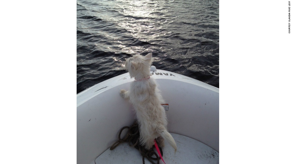 "Claudia Ruiz Levy shot this photo of her dog, Oprah, in West Palm Beach, Florida. ""She really thinks she is 'queen of the world' when she's on the boat... as well as everywhere else."""