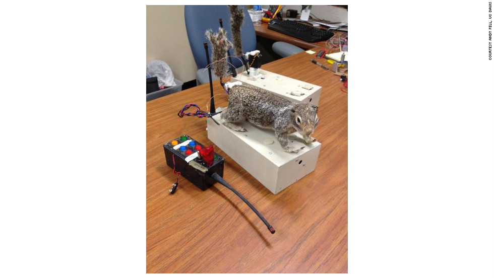 "Scientists have created ""robosquirrel"" in a bid to better understand the interaction between real squirrels and their main predator, rattlesnakes."