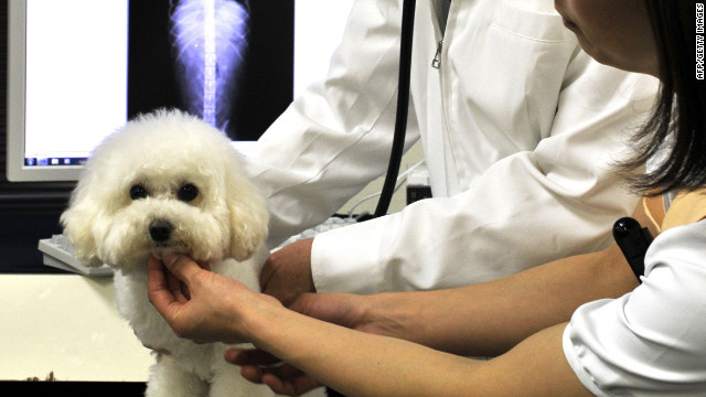Chiropractic care promotes proper alignment of a pet's musculoskeletal structure through regular adjustments.