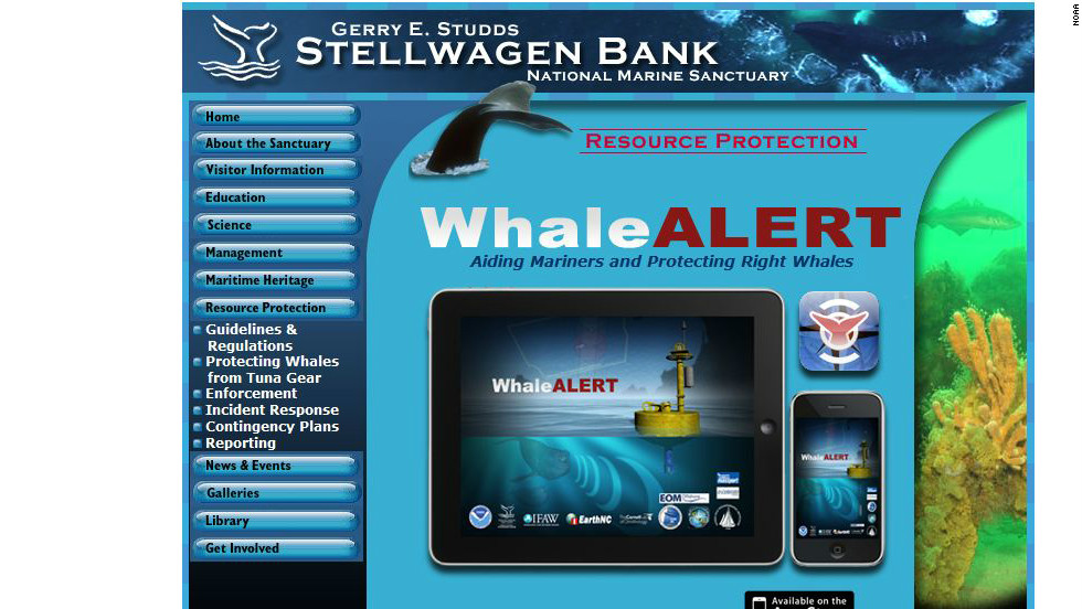 The Whale Alert App is available to download for free for anybody with an iPhone or iPad.