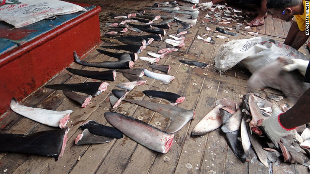 Environmentalist groups say more than 72 million sharks are killed every year, primarily for their fins.