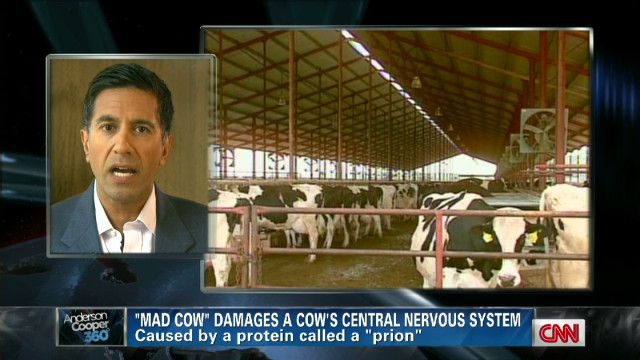 Controversy over 'mad cow' testing