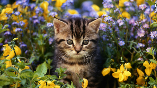 Be sure to check what plants are toxic to cats and dogs before planting your garden this year.