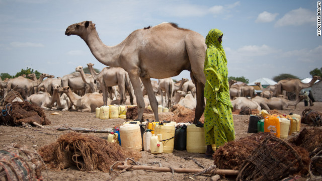 The average cost of a camel in Somalia is $700, according to a university study.