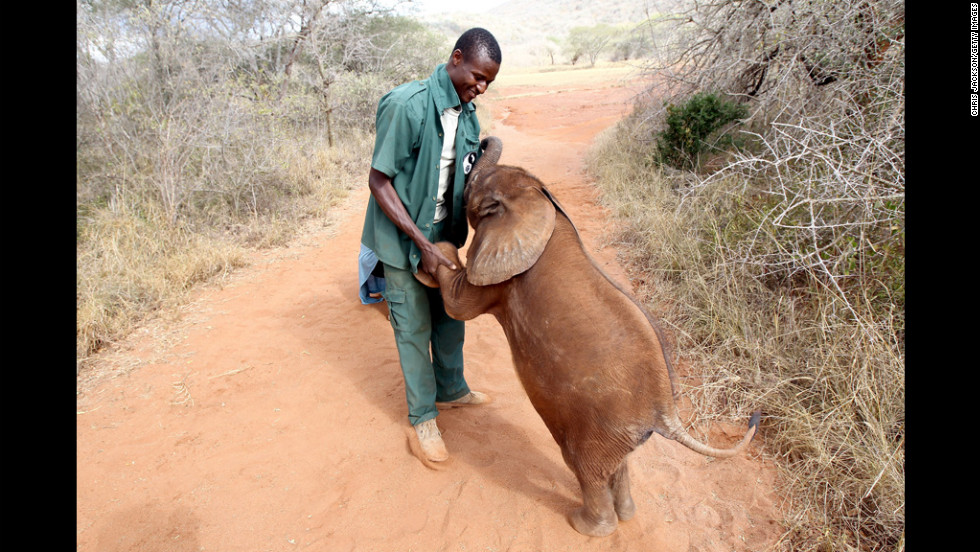 A five-month-old orphaned elephant called Tembo plays Tuesday with his keeper, Thomas Chalice, who has nutured the elephant at Tony Fitzjohn's rhino sanctuary in Mkomazi, Tanzania.