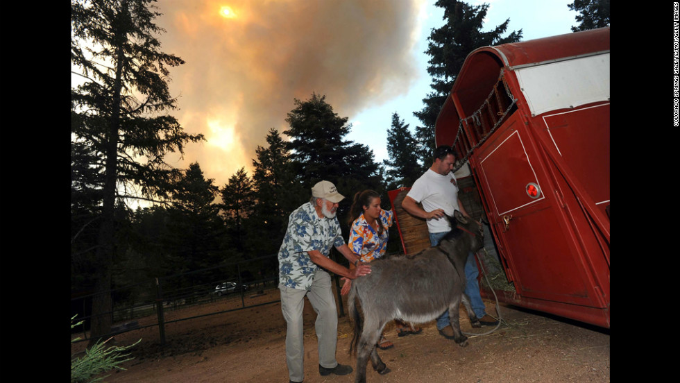 Greg and Karen Bodine help her father, Duane Schormann, left, load his animals into a trailer near Colorado Springs as they evacuate the area June 24.