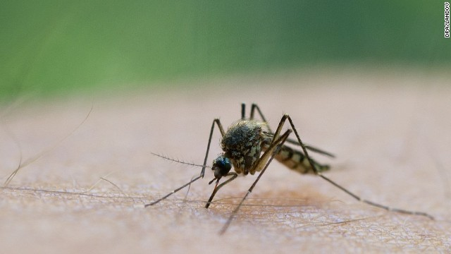 West Nile virus symptoms explained