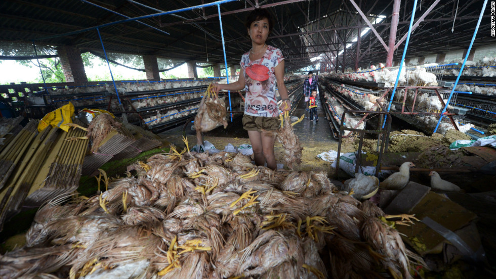 A farmer piles up chickens that drowned at a flooded farm in the outskirts of Chongqing, China, July 22.