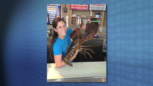 17-lb. lobster freed from dinner table