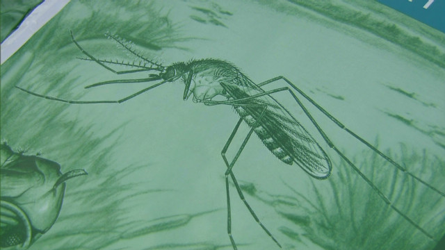 West Nile virus infections rise sharply