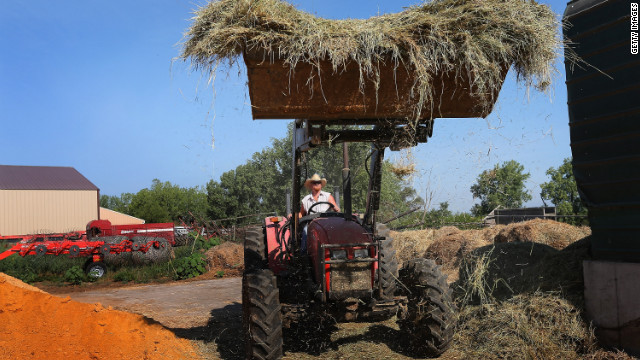 Jeremy Tilton adds hay to a ration of feed he is preparing in a feed mixer for cattle in Illinois. Tilton has to bring in feed to supplement drought-hit pasture grass.