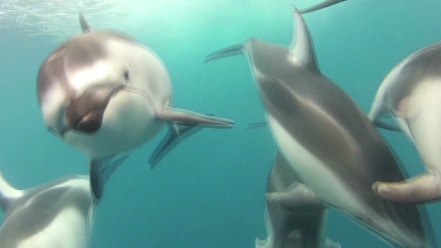 hln underwater dolphin video _00003512