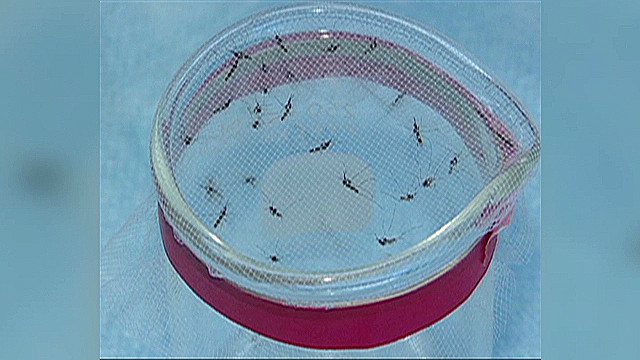 Protecting yourself from West Nile virus
