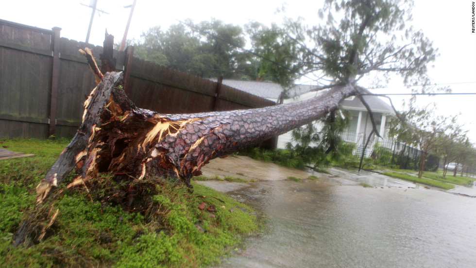 A tree toppled by hurricane-force winds lies on power lines near a home in New Orleans.
