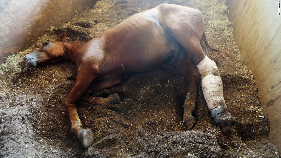 A wounded horse recovers Tuesday in Poydras, Louisiana, after being rescued when it got stuck in mud from storm flooding.